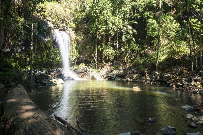 Hinterland de côte de Curtis Falls Mount Tamborine Gold photographie stock