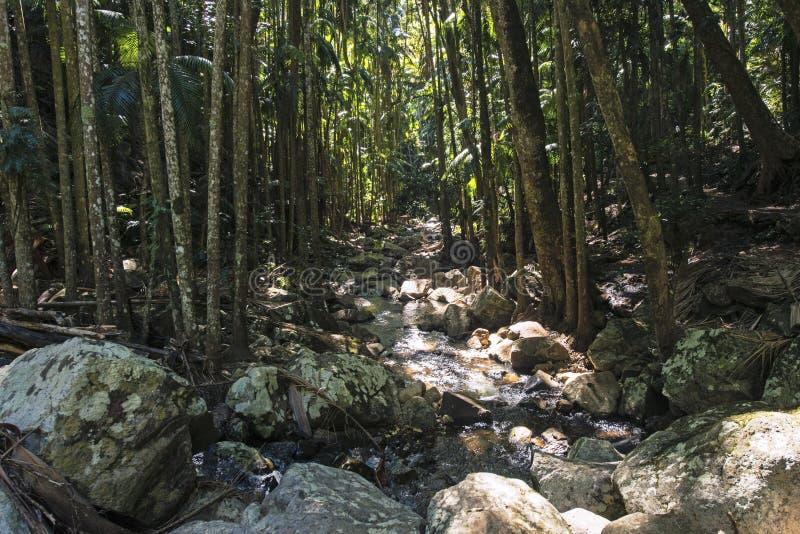 Hinterland de côte de Curtis Falls Mount Tamborine Gold images stock