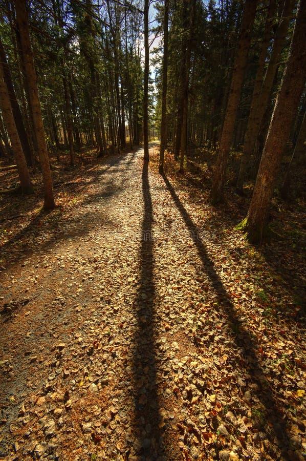 Hinterlanger Baum HDRs Sussex beschattet Blätter lizenzfreie stockfotos