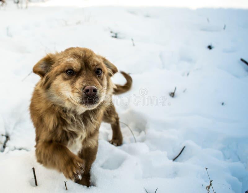 Hinterlistiges Hundegehen stockfotos
