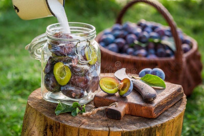 Hinzufügen des Zuckers in Glas mit Pflaumen für Kompott lizenzfreie stockfotos