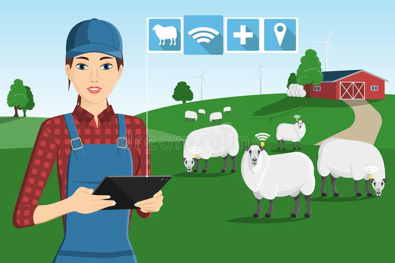 A farmer with a computer tablet. Is grazing a herd of sheep on a smart farm royalty free illustration