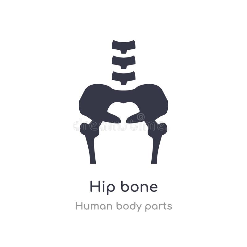 hip bone outline icon. isolated line vector illustration from human body parts collection. editable thin stroke hip bone icon on stock illustration