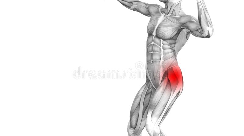 Hip human anatomy red spot inflammation articular joint pain royalty free illustration