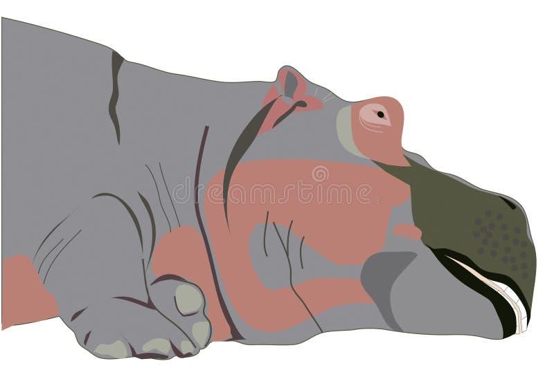 Hipopótamo imagens de stock