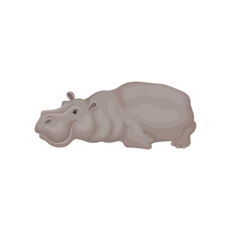 Hipopótamo cinzento bonito que encontra-se no assoalho Animal africano selvagem Grande hippopotamus Tema dos animais selvagens Íc ilustração royalty free