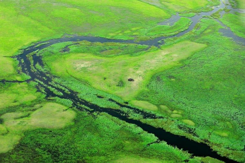 Hipopótamo escondido na vegetação verde Paisagem aérea no delta de Okavango, Botswana Lagos e rios, vista do avião Grama verde fotografia de stock royalty free