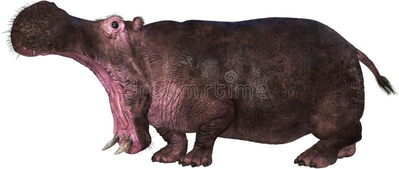 Hipopótamo, hipopótamo, fauna animal, aislado, ataque libre illustration