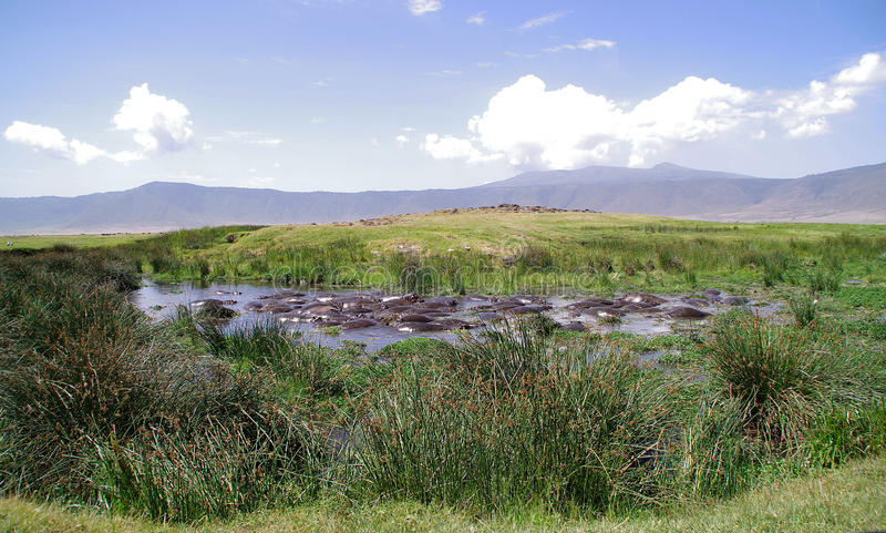 Hipopótamos del lago fotos de archivo