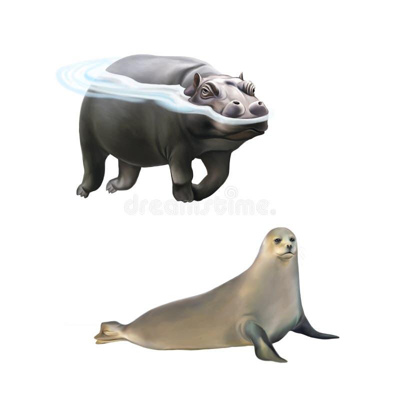 Hipopotamowy dopłynięcie w wodzie, harfy foka ilustracji