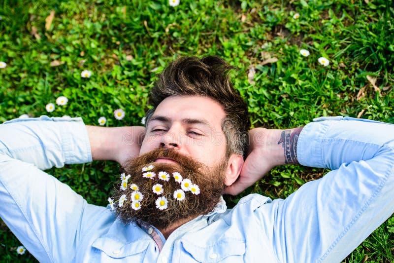 Hippie auf ruhigem Gesicht legt auf Gras, Draufsicht Kerl schaut freundlich mit Gänseblümchen- oder Kamillenblumen im Bart Mann m lizenzfreie stockbilder
