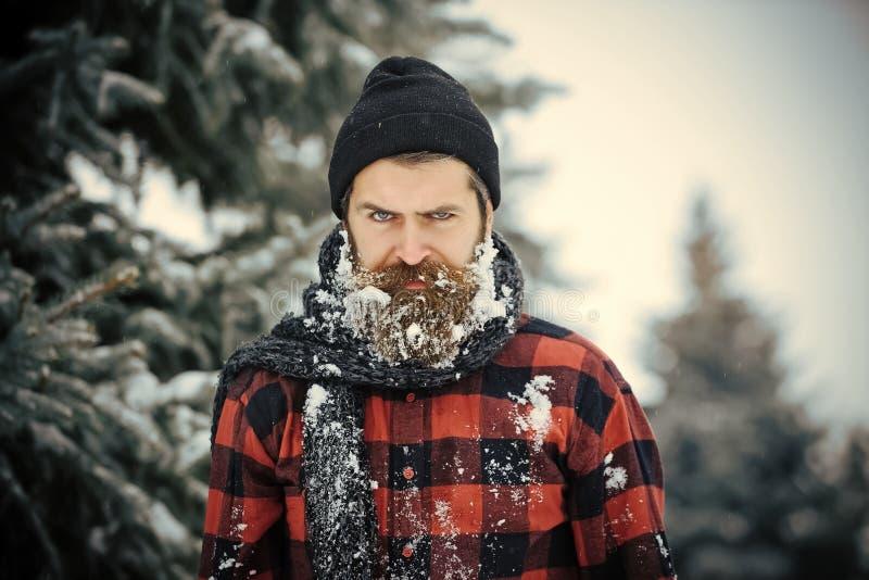 Hippie de Noël dans le chapeau au bois photo stock
