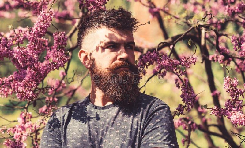 Hippie genießt Frühling nahe violetter Blüte Bärtiger Mann mit dem neuen Haarschnitt, der mit Blüte von judas Baum aufwirft parfü lizenzfreies stockbild