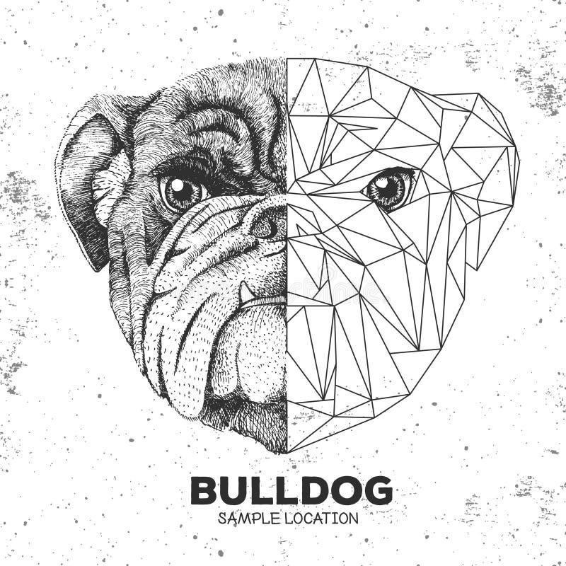 Hippie-tierisches realistisches und polygonales Bulldoggengesicht vektor abbildung