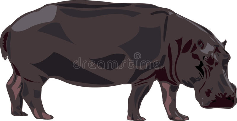 Download Hippo In Africa Royalty Free Stock Images - Image: 17513759
