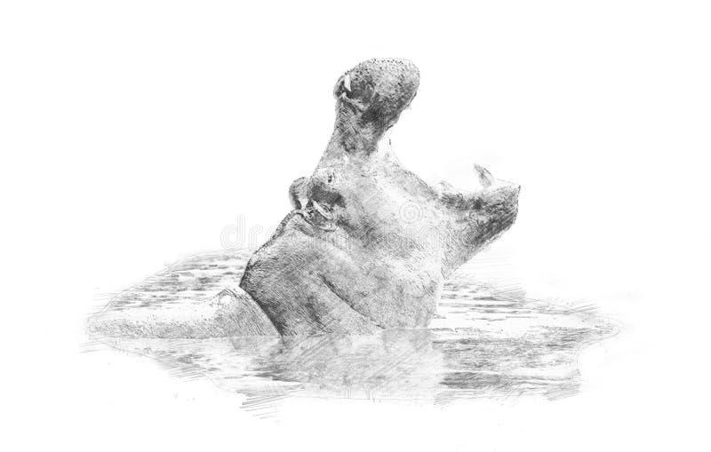hippo Esboço com lápis ilustração stock