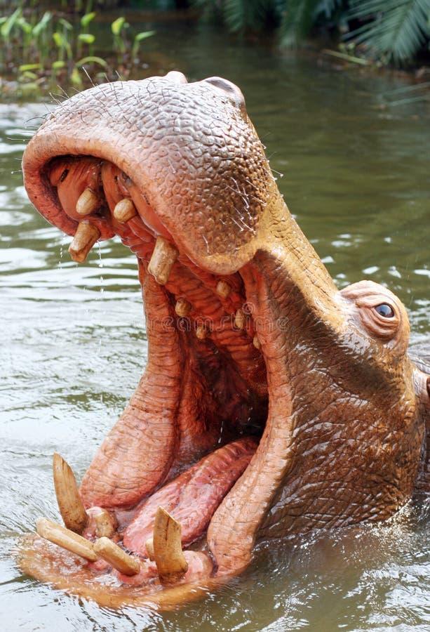hippo niebezpieczne zdjęcia stock