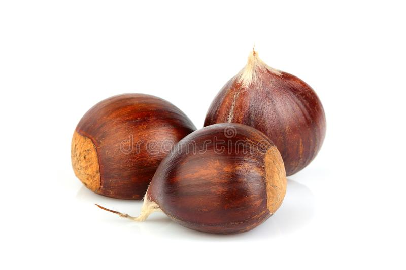 Hippocastanum.Chestnuts isolated.Hippocastanum. Chestnuts isolated on a white background. Hippocastanum royalty free stock images