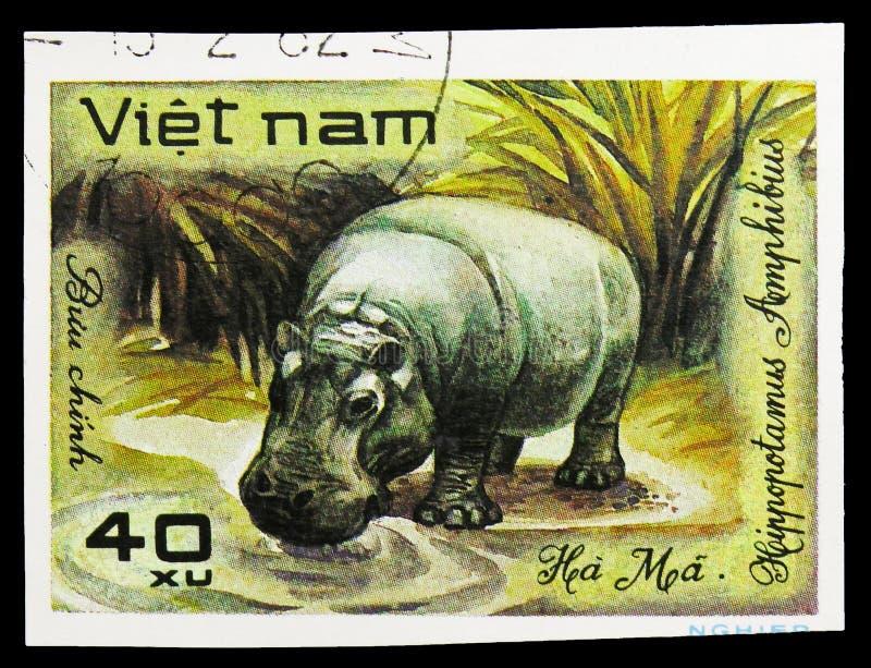 Hippopotamus (Hippopotamus amphibius), World wild animals serie, circa 1981. MOSCOW, RUSSIA - SEPTEMBER 26, 2018: A stamp printed in Vietnam shows Hippopotamus ( stock image