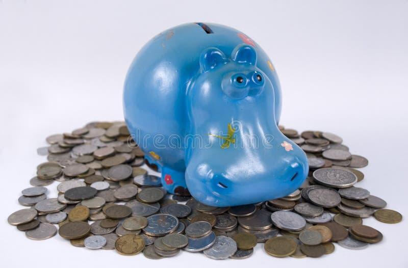 Hippopotamus bank stock photos