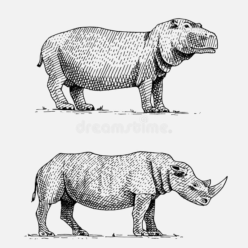 Hippopotamus and black or white rhinoceros hand drawn, engraved wild animals in vintage or retro style, african zoology royalty free illustration