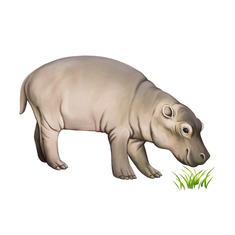Hippopotamus de chéri D'isolement sur le blanc illustration libre de droits
