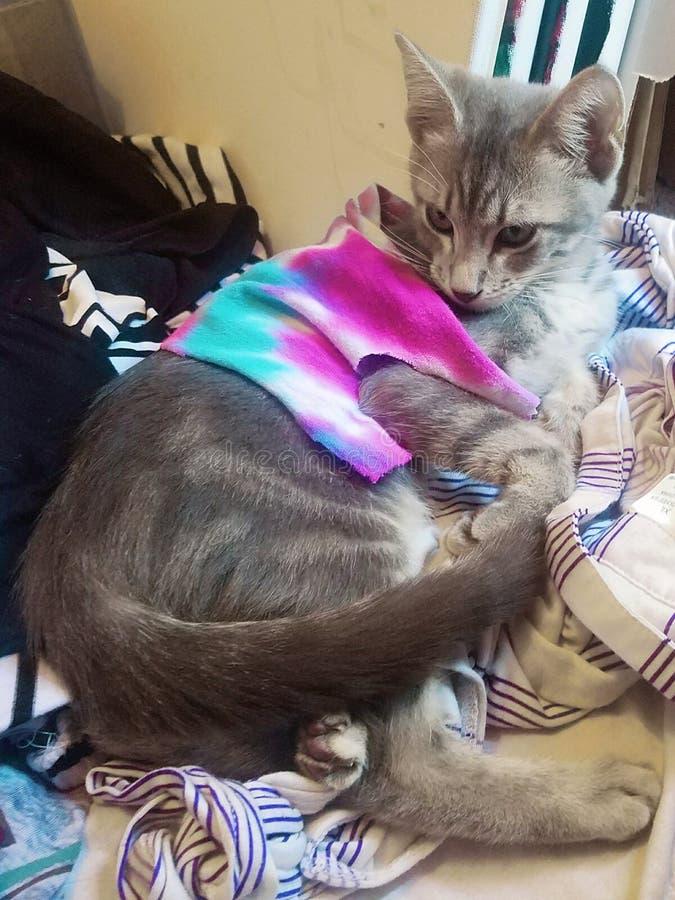Hippy Cat Chillin ` royalty-vrije stock afbeelding