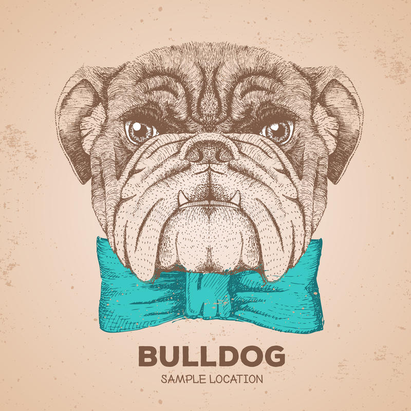 Hipster animal bulldog. Hand drawing Muzzle of animal dog. Hipster animal bulldog. Hand drawing Muzzle of animal royalty free illustration