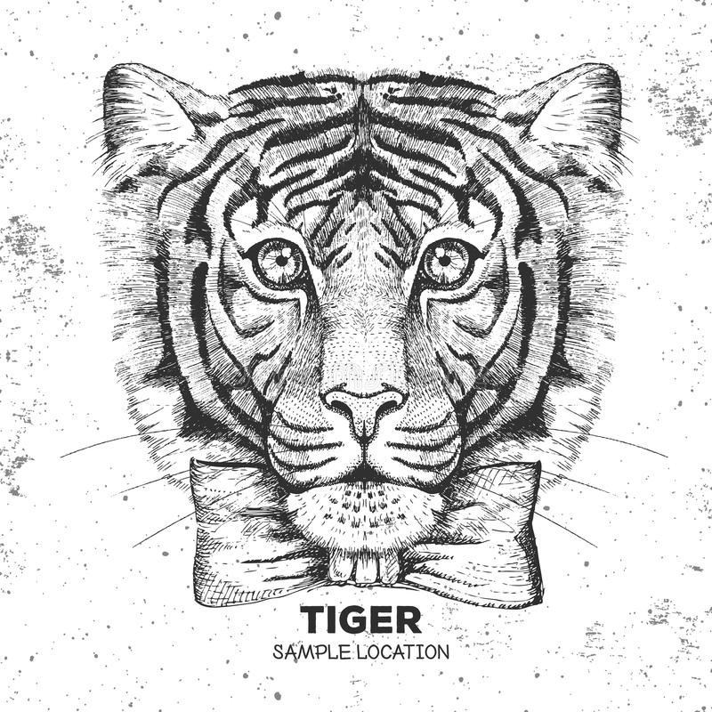 Hipster animal tiger. Hand drawing Muzzle of tiger. Hipster tiger. Hand drawing Muzzle of tiger vector illustration
