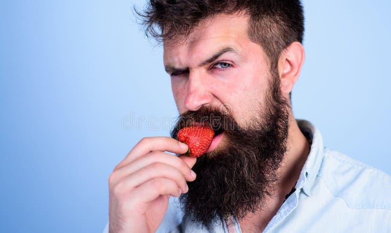 Hipster för stilig strikt framsida för man sexig med den långa skäggförsökjordgubben Hipsteren tycker om den saftiga mogna röda j arkivbild