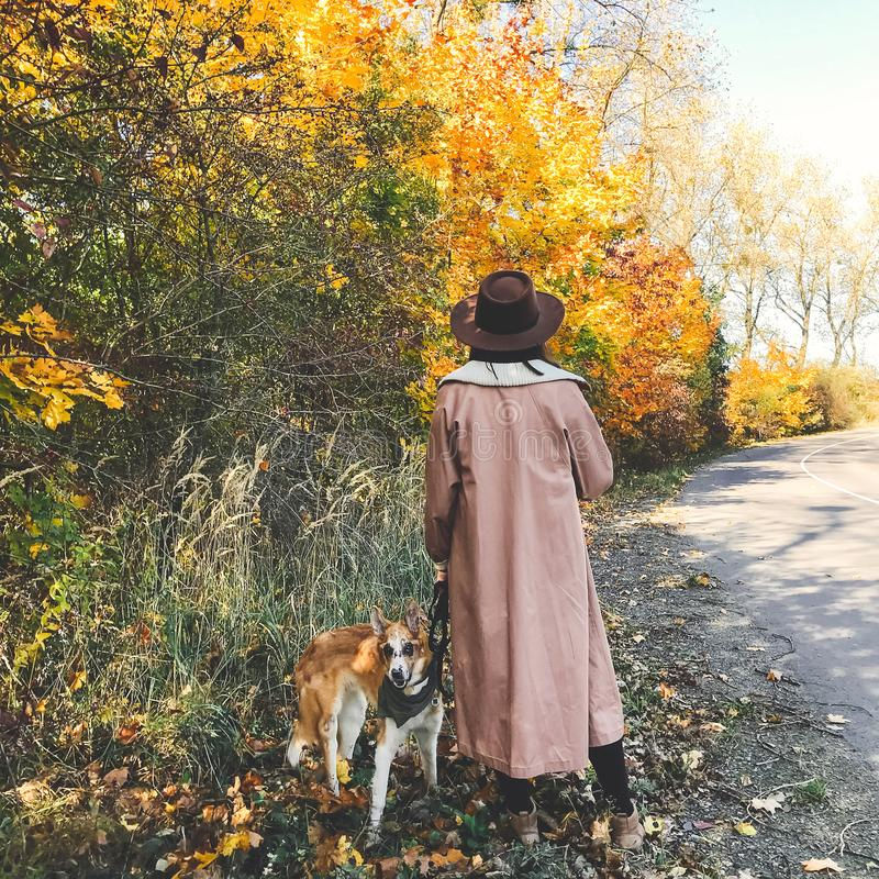 Hipster girl in hat and coat walking with her golden dog on autumn road with fall leaves. Woman with dog traveling in autumn. Countryside, walking at beautiful stock photos