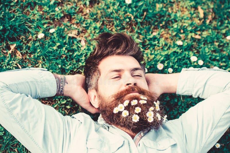 Hipsteren på fridsam framsida lägger på gräs, bästa sikt Grabben ser utmärkt med tusenskönan, eller kamomillen blommar i skägg 30 royaltyfria foton