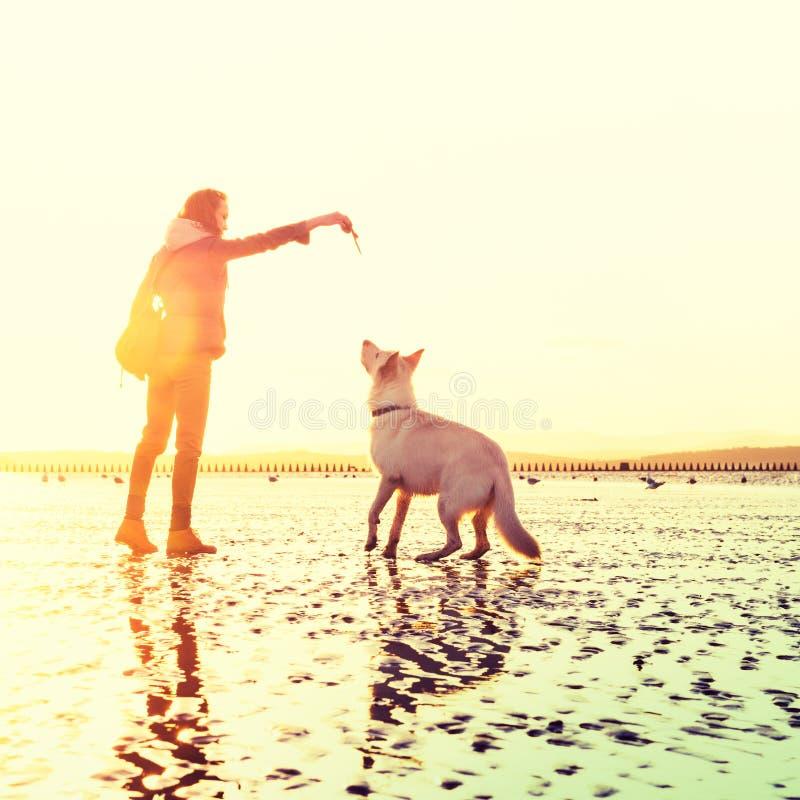 Hipstermeisje het spelen met hond bij een strand tijdens zonsondergang, het sterke effect van de lensgloed stock fotografie