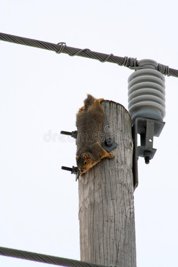 Download Hire Wire stock photo. Image of shocking, electric, mammal - 459176