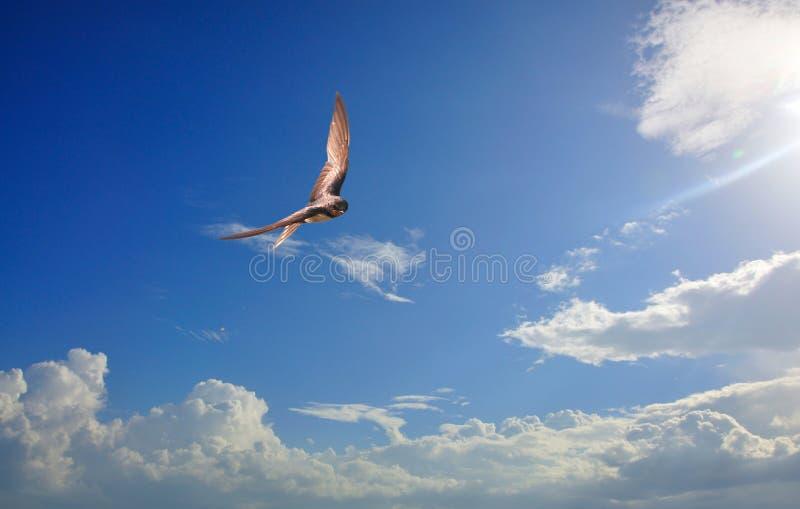 Download Hirondelles photo stock. Image du lumière, cloudscape - 45360214