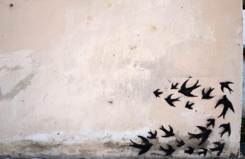 Hirondelles de noir photos libres de droits