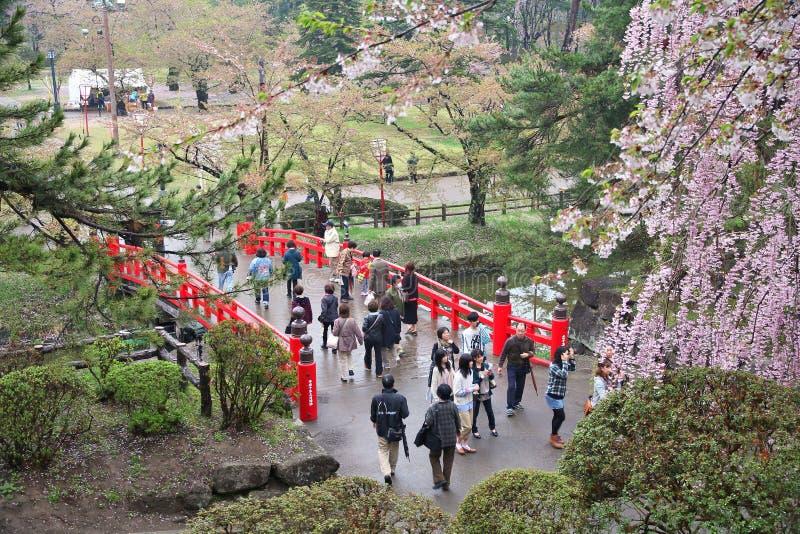 Hirosaki körsbärsröd blomning royaltyfri foto