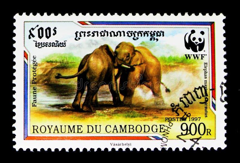 Hirsutus malaisien de maximus d'Elephas d'éléphant, WWF - serie de Malaya Elephant, vers 1997 photos libres de droits
