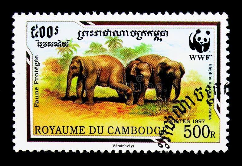 Hirsutus malaisien de maximus d'Elephas d'éléphant, WWF - serie de Malaya Elephant, vers 1997 photo libre de droits