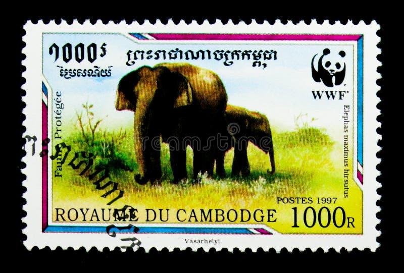 Hirsutus malaisien de maximus d'Elephas d'éléphant, WWF - serie de Malaya Elephant, vers 1997 photos stock