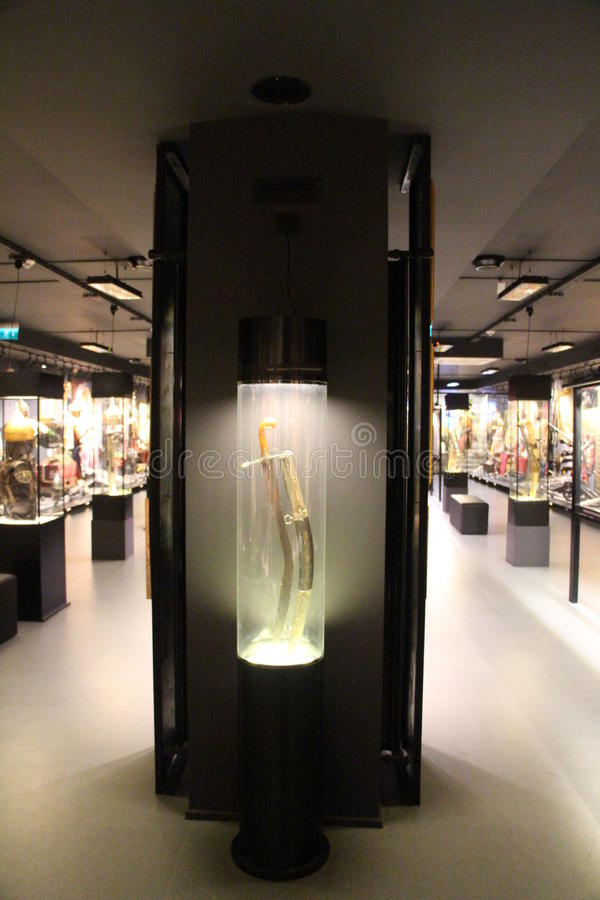 Hisart, światy najpierw i tylko żyjący historii muzeum dioramę zdjęcie stock
