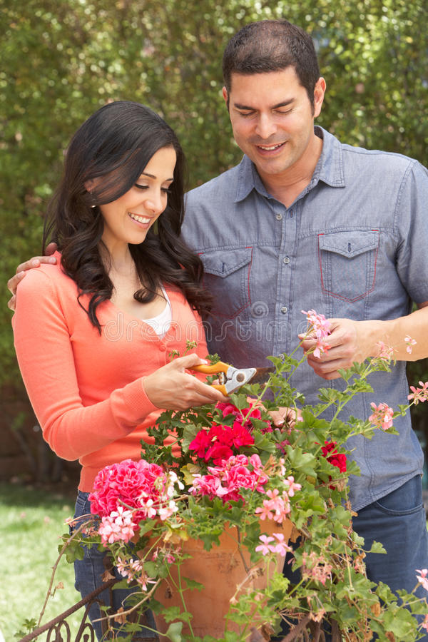 Hispanic Couple Working In Garden Tidying Pots royalty free stock photo