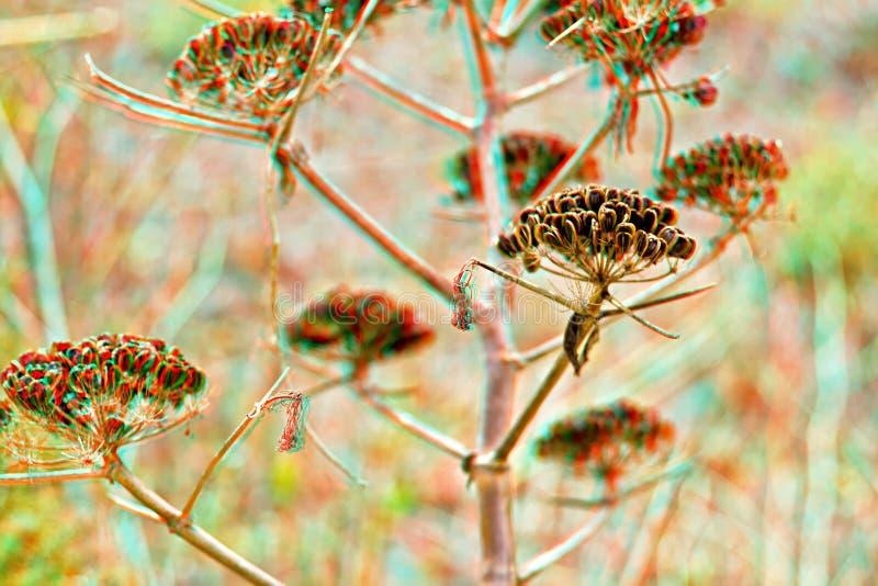Hispida аралии - bristly сассапариль 3D стоковое фото