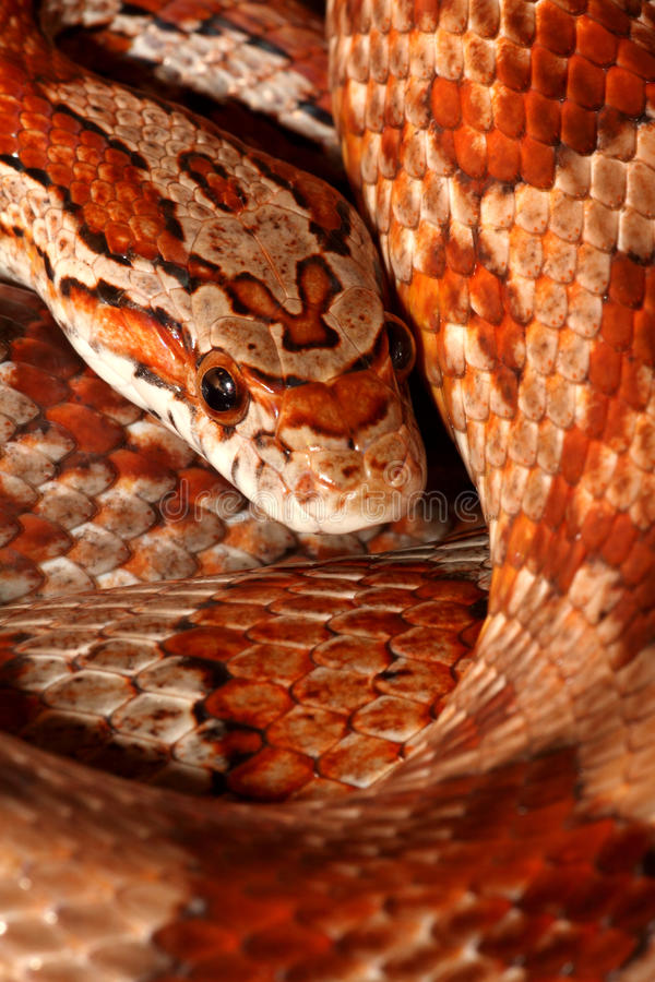 Free Hiss Stock Images - 9373314
