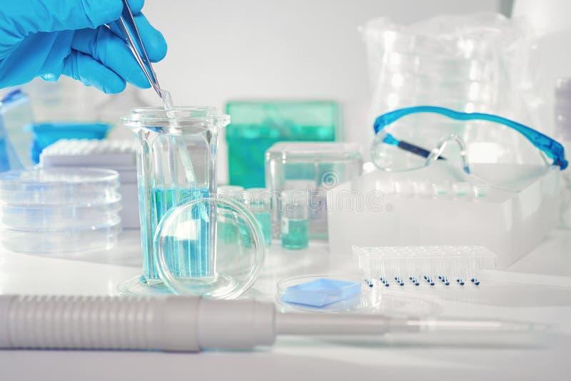 Histochemical befläcka av diagnostik för cancer för tor för silkespapperprövkopior royaltyfria foton