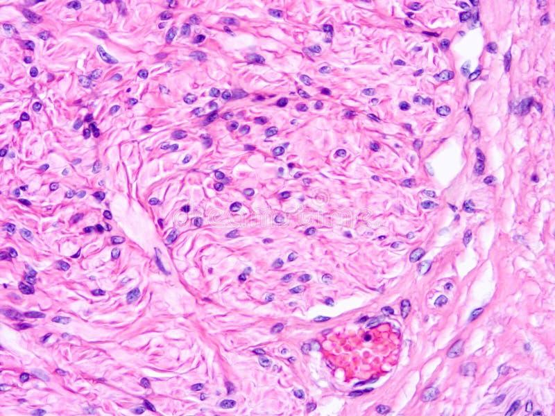 Histologia ludzka tkanka obraz stock
