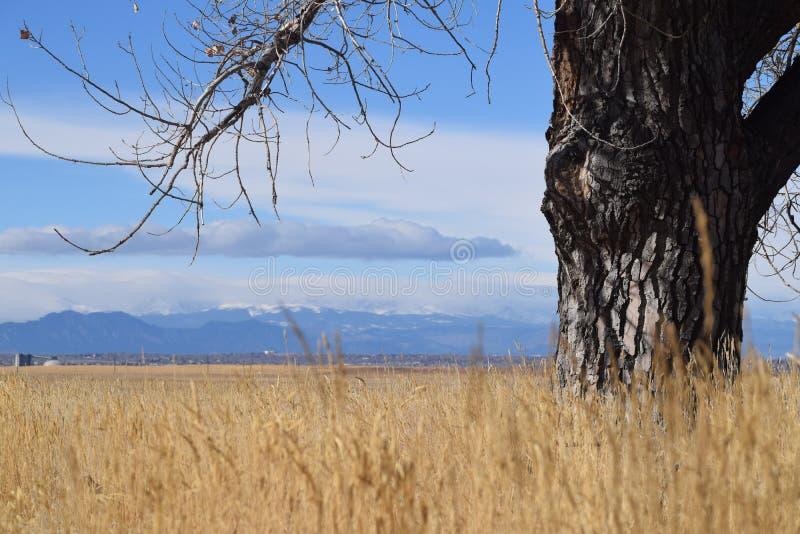 Historias que caminan: Árbol que mira a Rocky Mountains en la distancia foto de archivo libre de regalías