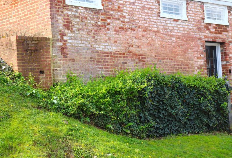 Historic Brick Building and Ivy Growing Thickly on Property stock photo