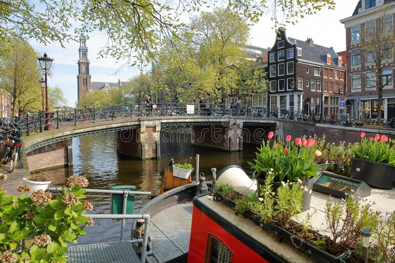 Historic buildings along Prinsengracht canal with Westerkerk Church clock tower in the background and colorful flowers and plants. On a houseboat in the stock image