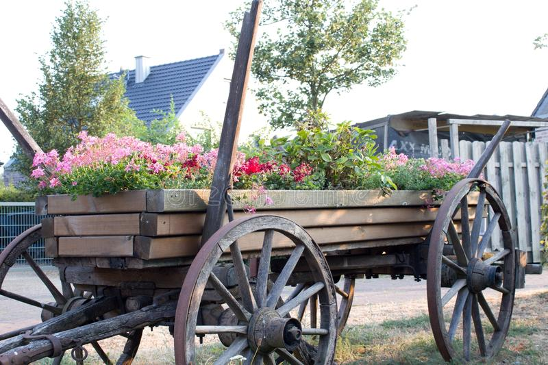 Historic cart with blooming flowers royalty free stock image